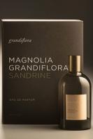 Grandiflora Magnolia Grandiflora Sandrine